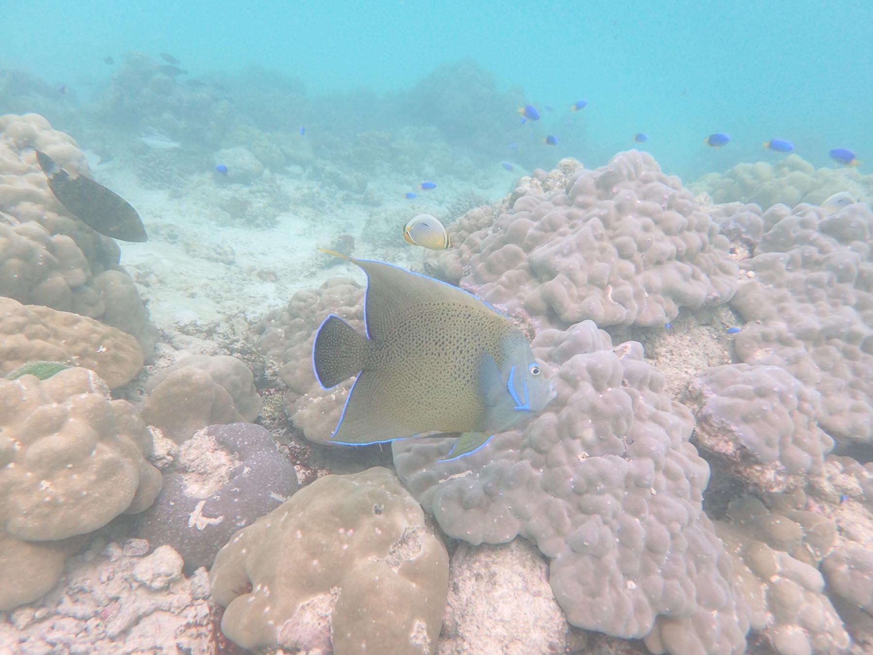 donations-western-indian-ocean-marine-science-association