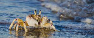 contact-us-western-indian-ocean-marine-science-association-WIOMSA-ecology-research-capacity-Zanzibar-Tanzania