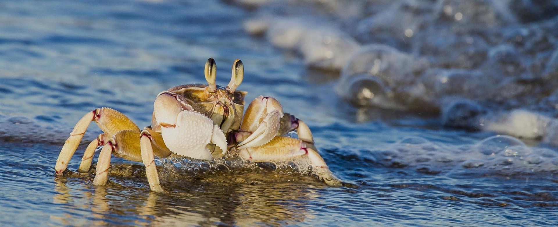 contact-us-western-indian-ocean-marine-science-association