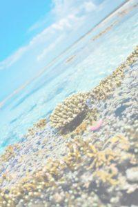 news-western-indian-ocean-marine-science-association-WIOMSA-research-capacity-ecology-Zanzibar-Tanzania
