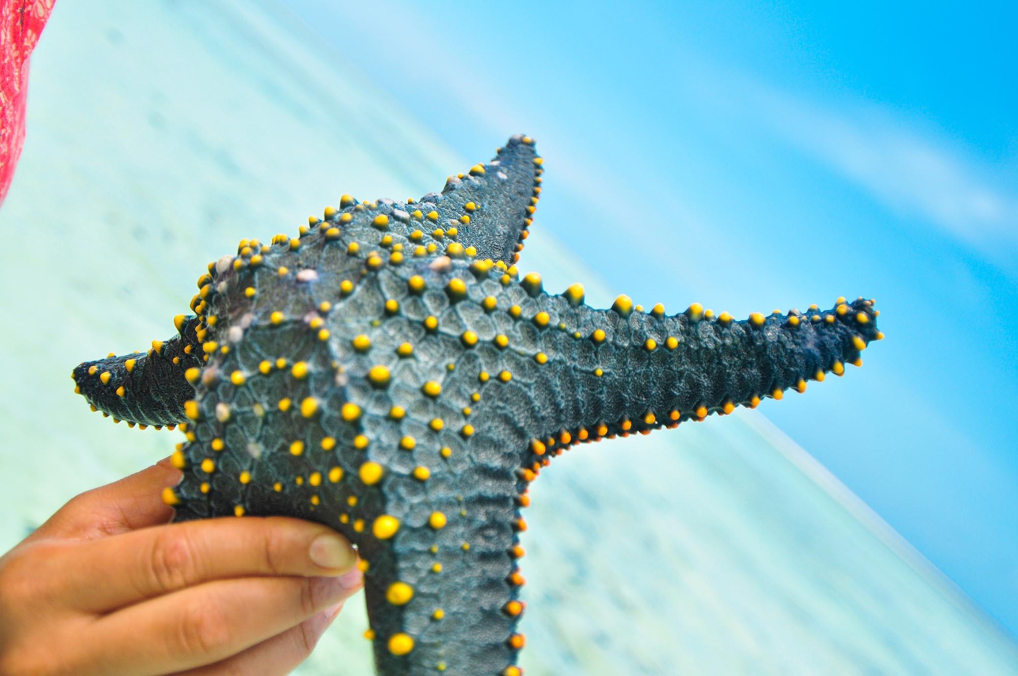 Membership | Western Indian Ocean Marine Science Association
